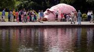 Nieuwste inwoner van Boom is een reuzenvarken