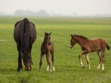 Dwangsom Asten tegen paardenhouder terecht