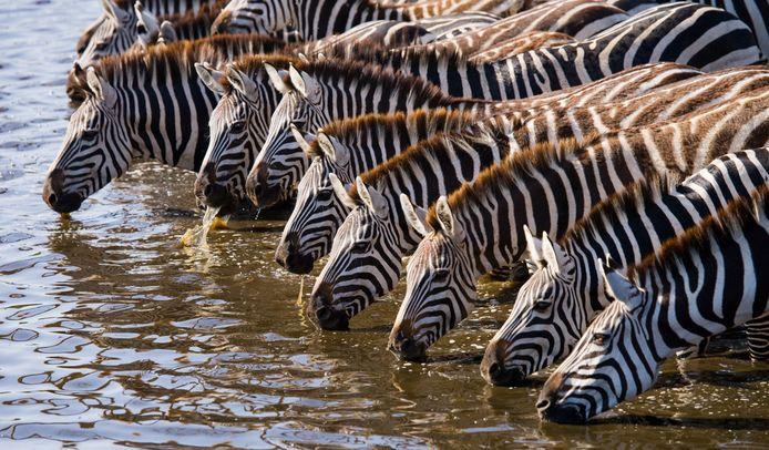 Ook collega's op werk vertonen kuddegedrag, zegt neuropsycholoog Chantal van der Leest.