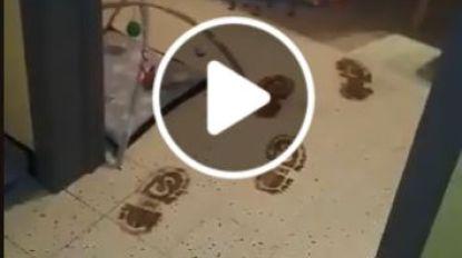 """VIDEO: """"Kijk mama! De hoefjes van het paard van de sint!"""""""
