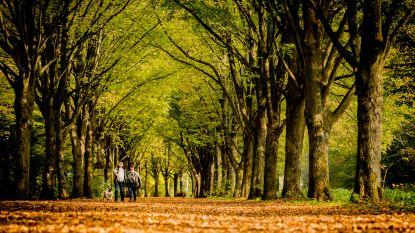 Lochristi krijgt er jaarlijks 166 bomen bij, al veertien jaar lang