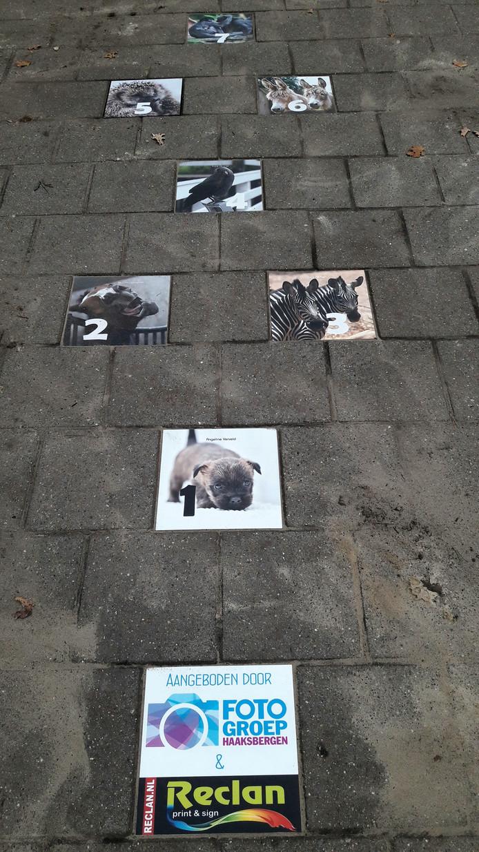 Fotohinkelen op Beweeg-plein Honesch-school in Haaksbergen