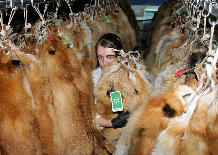In Vlaanderen zijn nog 17 nertsenkwekerijen actief die samen jaarlijks ongeveer 200.000 nertsen kweken.