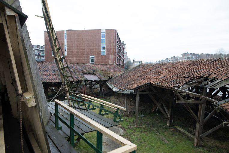 De droogloodsen die rondom de molen liggen. Beeld Willem de Kam