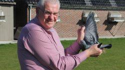 De duurste duif ter wereld krijgt bewakers