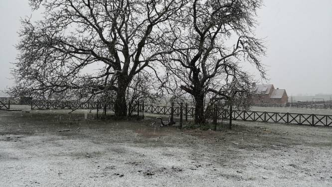 En daar zijn de eerste sneeuwvlokjes van 2021!