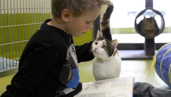 In Amersfoort mochten moeilijk lezende kinderen al eerder voorlezen aan katten.