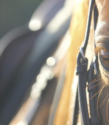 Paard en Buitenleven mikt op breed pubiek