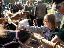 58ste Ponymarkt Brakel verandert door corona in struintocht door het dorp