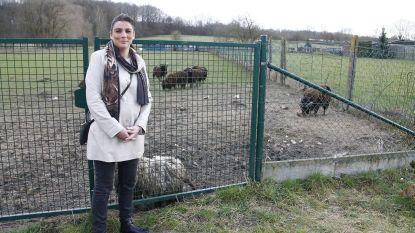 Schapen en ezels verwaarloosd