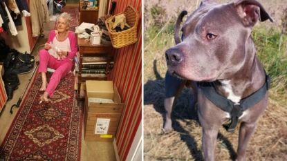 """Vrouw was erg bang voor pitbull van buurman en vond hem """"gemeen"""" tot hij haar leven redde"""