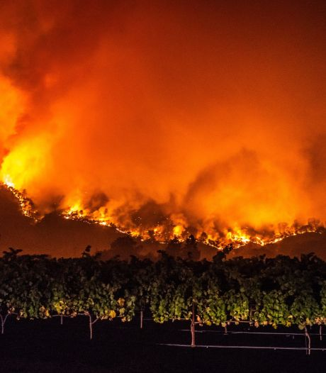 Incendies en Californie: une quatrième victime, les domaines viticoles durement touchés