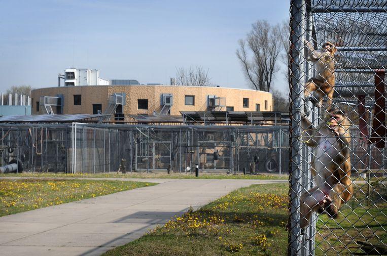Resusapen in proefdiercentrum BPRC in Rijswijk. Beeld Marcel van den Bergh