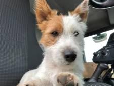 43-jarige die hondje Dribbel doodstak bekende hardloper: 'Hij had zijn route op Strava al gewist'