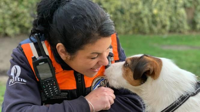 """Jim (2) is kleinste politiehond van het land: """"Sommigen schreven hem bij voorbaat al af, maar hij heeft ons allemaal verbaasd"""""""