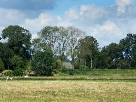 'Straks geen iepen meer in ons Hoeksche polderlandschap'