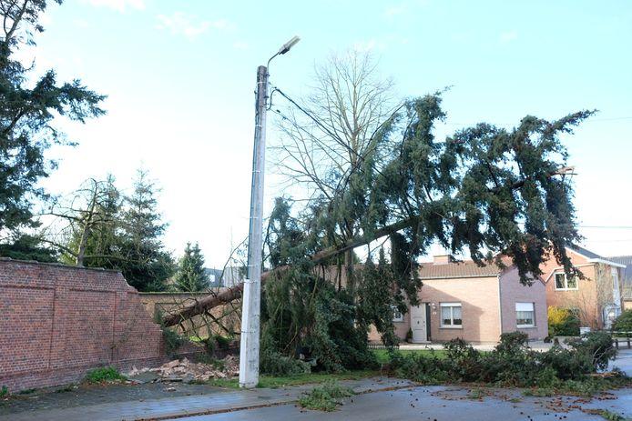 In Elewijt viel in maart een boom op de pastorijmuur.