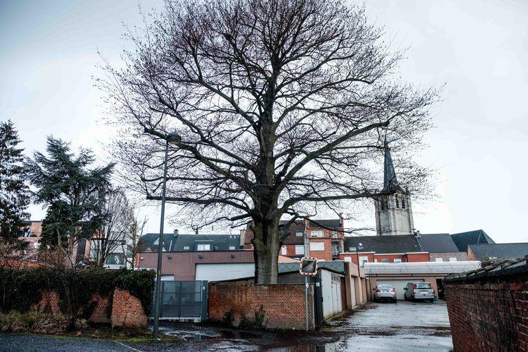 Het bestuur heeft de bouwvergunning geweigerd van een nieuw appartementsblok, mede door de eeuwenoude Beukenboom die anders zou verdwijnen.