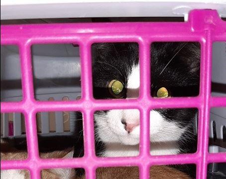 Eén van de gedumpte katten