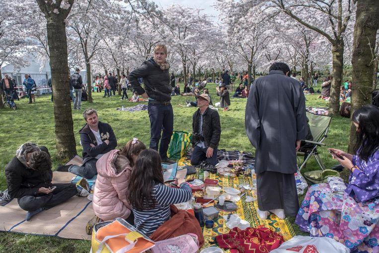 Het Cherry Blossom Festival in 2016: picknicken onder de bloesem Beeld Jorris van Gennip