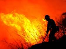 1,5 hectare grondvuur bij bosbrand in Oostelbeers, 'bomen vrijwel onbeschadigd'