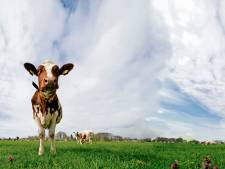 Waalwijk komt terug op 'stikstofbesluit': 100 hectare agrarische grond alsnog verpacht