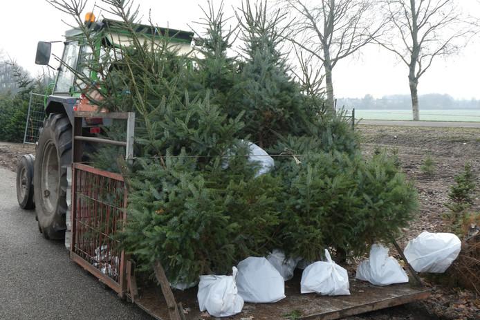 Met de tractor worden de kerstbomen in Halder van het land gehaald.