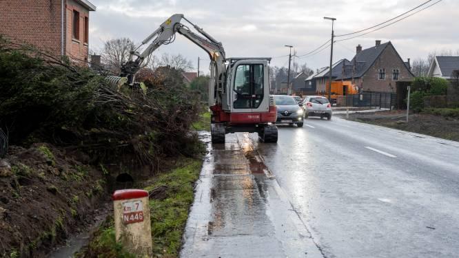 Voorbereidende werken voor heraanleg N446 begonnen: alle bomen langs gewestweg worden gerooid