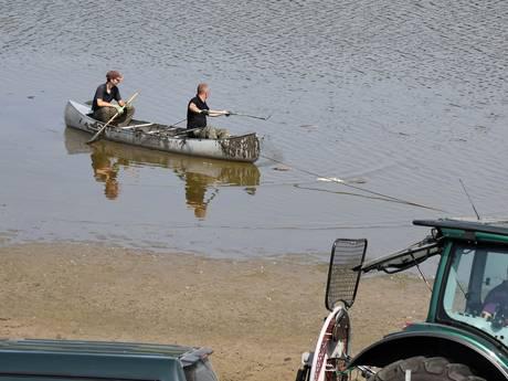 Honderden dode vissen geruimd in  Oude Waal