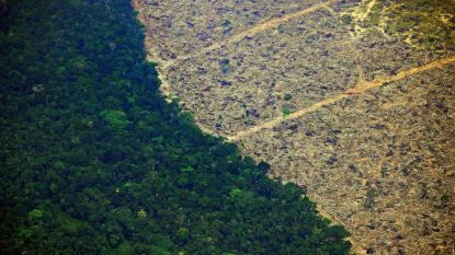 Recordoppervlakte ontbost in Amazoneregenwoud