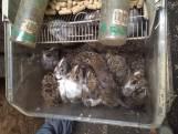 Ruim honderd ernstig verwaarloosde knaagdieren en vogels bevrijd in West-Brabant
