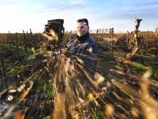 Oude stammetjes krijgen laatste bestemming: 'Perenhout brandt super'