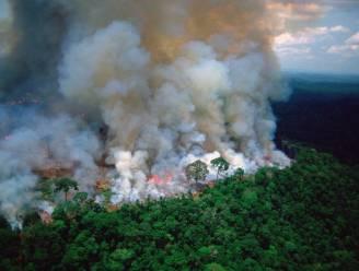 Sterren uiten bezorgdheid over Amazonewoud ... met foutieve foto's