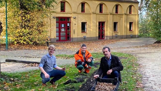7.000 bijvriendelijke biobloembollen gaan de grond in bij Kasteelpark Zwevezele