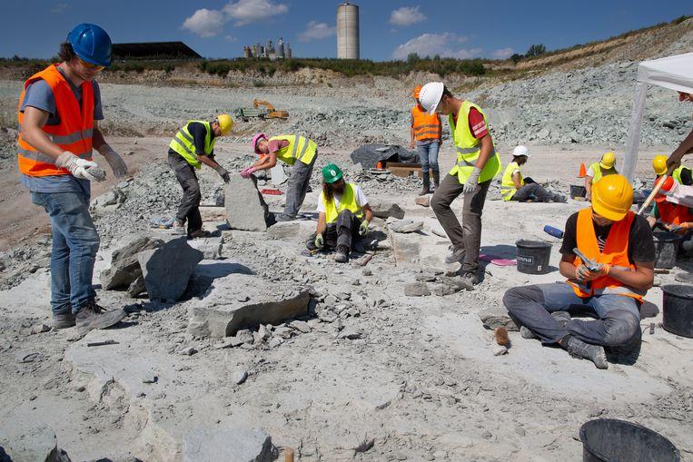 Paleontologen doen onderzoek in de steengroeve bij Winterswijk. Ze zoeken naar fossielen van miljoenen jaren oud.  Beeld Herman Engbers