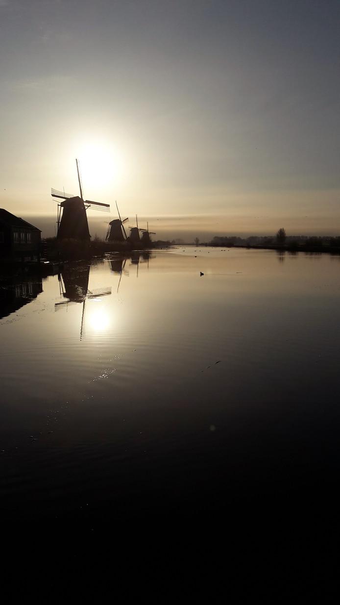 De molens van Kinderdijk weerspiegelen in de ochtendzon in het water van de boezem.