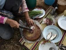 Thaise artsen waarschuwen voor dodelijk, populair visgerecht