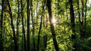 Eerste bomen nieuw bos geplant in Park Groot Schijn