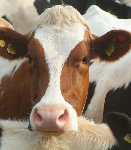 'Den Haag kom snel met regels voor intensieve veehouderij'