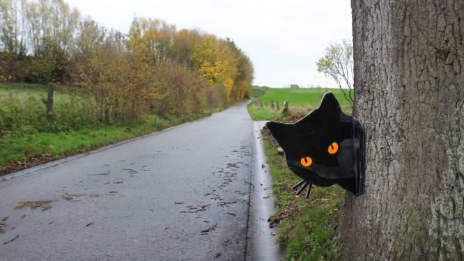 Inwoners Steenbergstraat vragen via kattenfiguren snelheid in straat te minderen