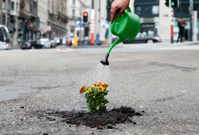 Nederlander vult gaten in Belgische wegen met bloemen