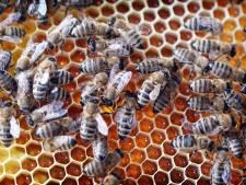 Annette Velnaar krijgt prijs voor beste honingproduct bij Imkersvereniging Vriezenveen