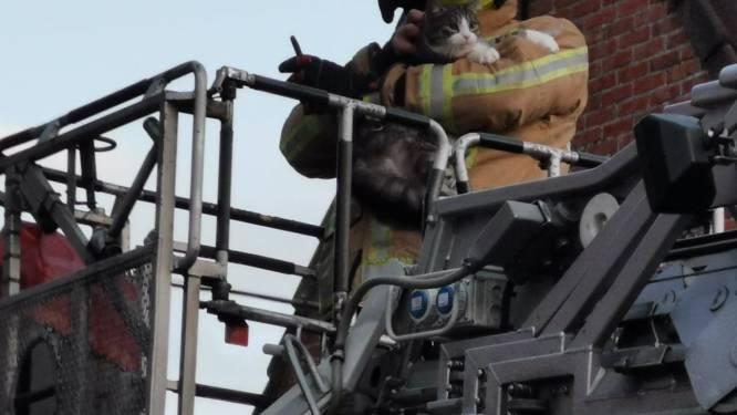 Brandweer bevrijdt kat uit metershoge boom