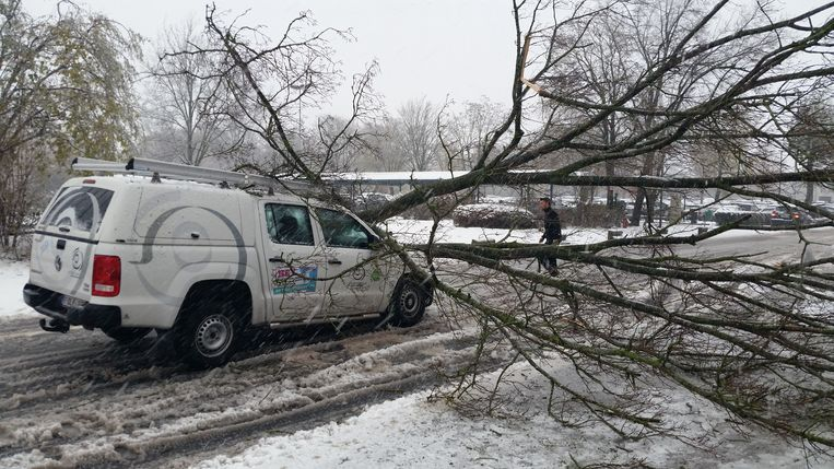 Een boom bezwijkt onder de sneeuw aan het AZ Sint-Jan in Brugge en belandt op een wagen.