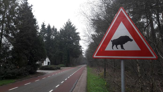 Verkeersbord in Bergeijk wijst op eventueel gevaar vanwege everzwijnen. Dit bord staat aan de Witrijtseweg