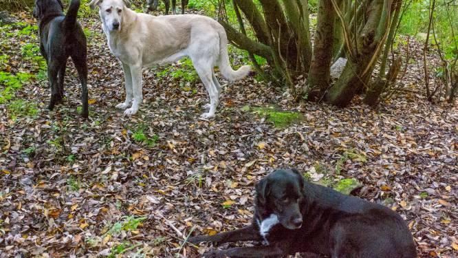"""Hondenbaasje reageert op doodgebeten guanaco's Planckendael: """"Ik weet niet meer wat ik met die mannen aan moet"""""""