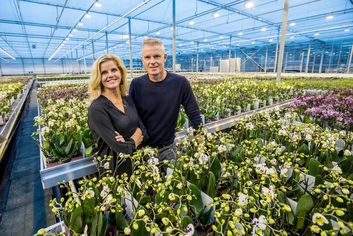 OK Plant uit Naaldwijk
