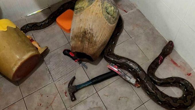 Python valt vrouw aan op het toilet