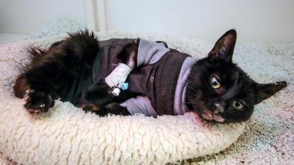 Dierenbeul die kat Sprotje in oven stopte, daagt niet op in rechtbank