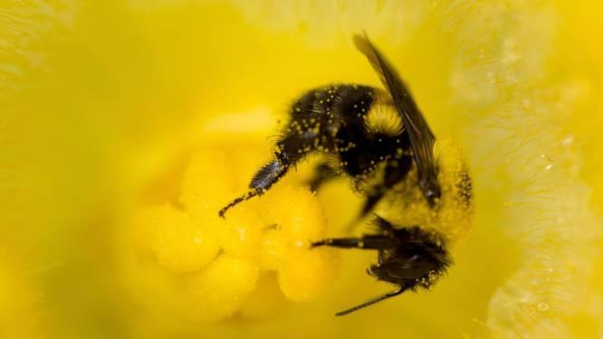 Wetenschappers hopen met bijengif kanker te bestrijden